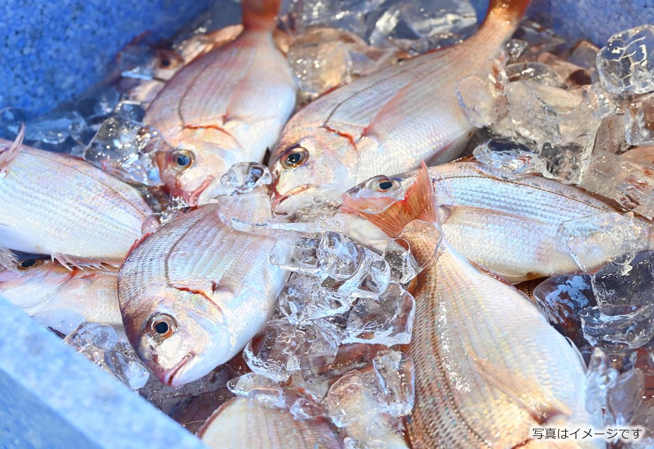 鮮魚・軽食等の写真